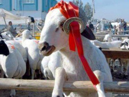 Diyanet: Hayvan stoğu sıkıntısı yok