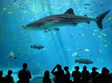Dünyanın en büyük akvaryumları
