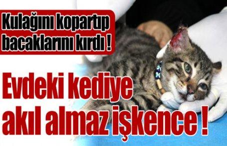 Evdeki kediye akıl almaz işkence !