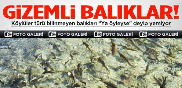 Gizemli balıkları dualı diye avlayıp yemiyorlar