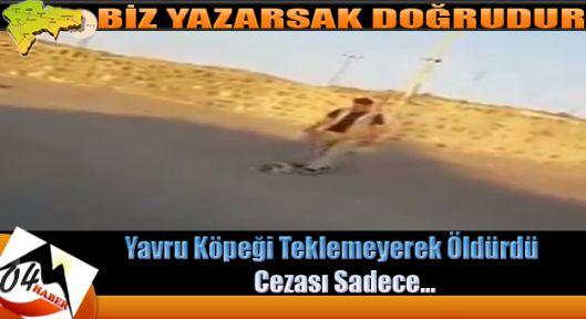Vahşice Öldürdüğü Köpek İçin Aldığı Ceza Şok Etti